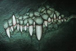 Dentition-crocodilienne