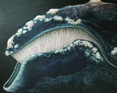 Eubalaena-glacialis---Baleine-des-basques